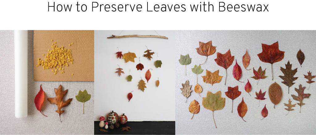 How to Preserve Leaves in Beeswax