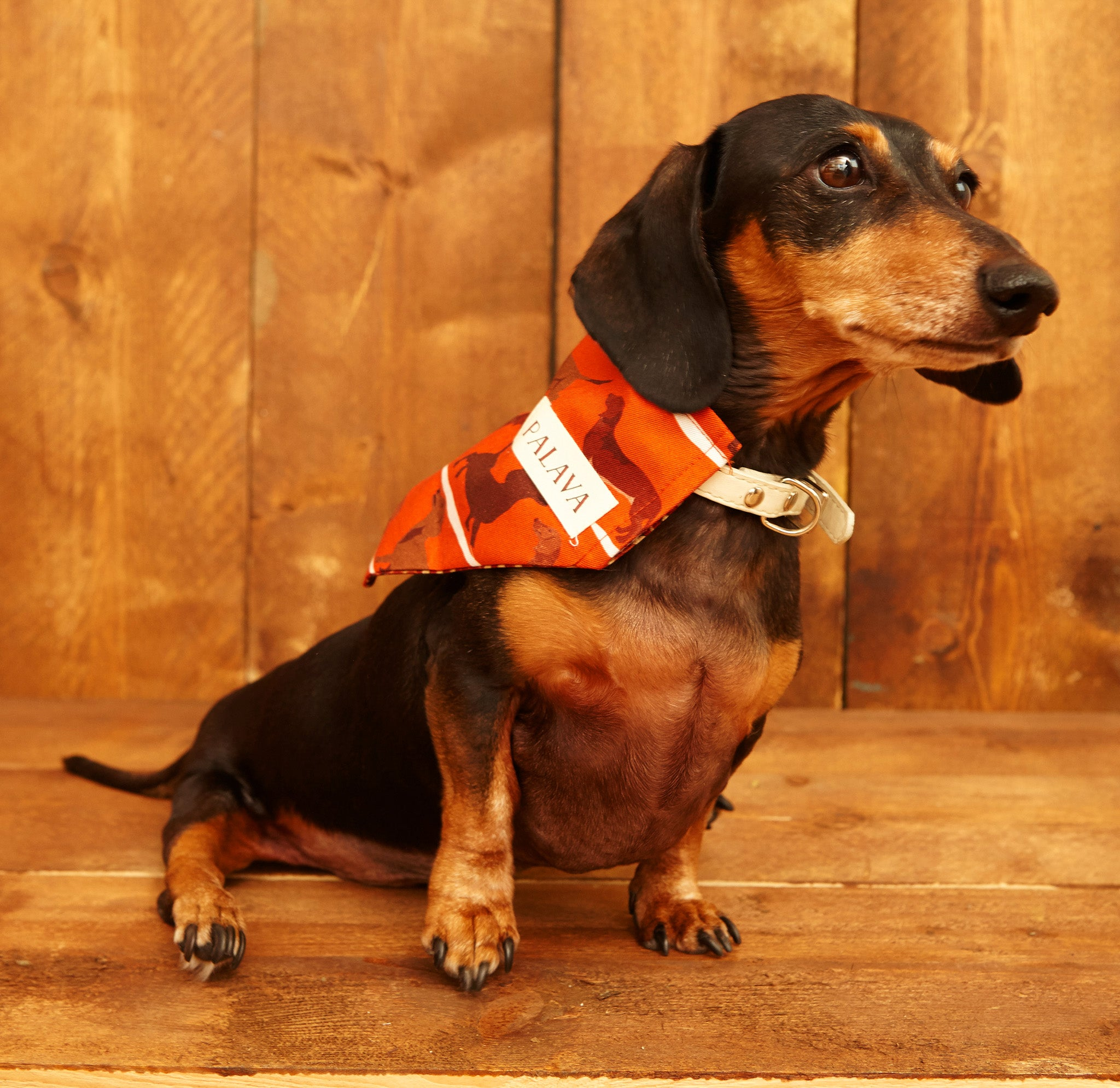 Dog Bandana - Rust Sausage Dog - Palava