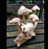Carved Wooden Mushrooms 6 Stem Natural - AsianWoodCraftUK
