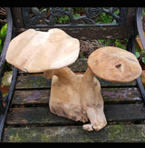 Teak Root Twin LRG Mushrooms - AsianWoodCraftUK