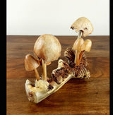 Hand Carved Parasite 6 Mushrooms Carving Med - AsianWoodCraftUK