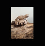Parasite wood tropical frog carving - AsianWoodCraftUK