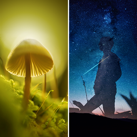 Psilocybin Vs. MDMA for Medical Treatment