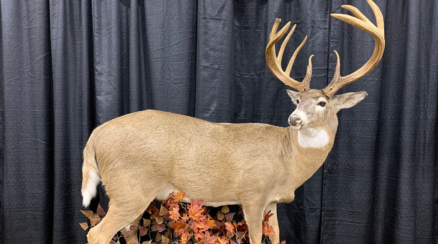 The Largest Typical Buck Ever Taken in the U.S.