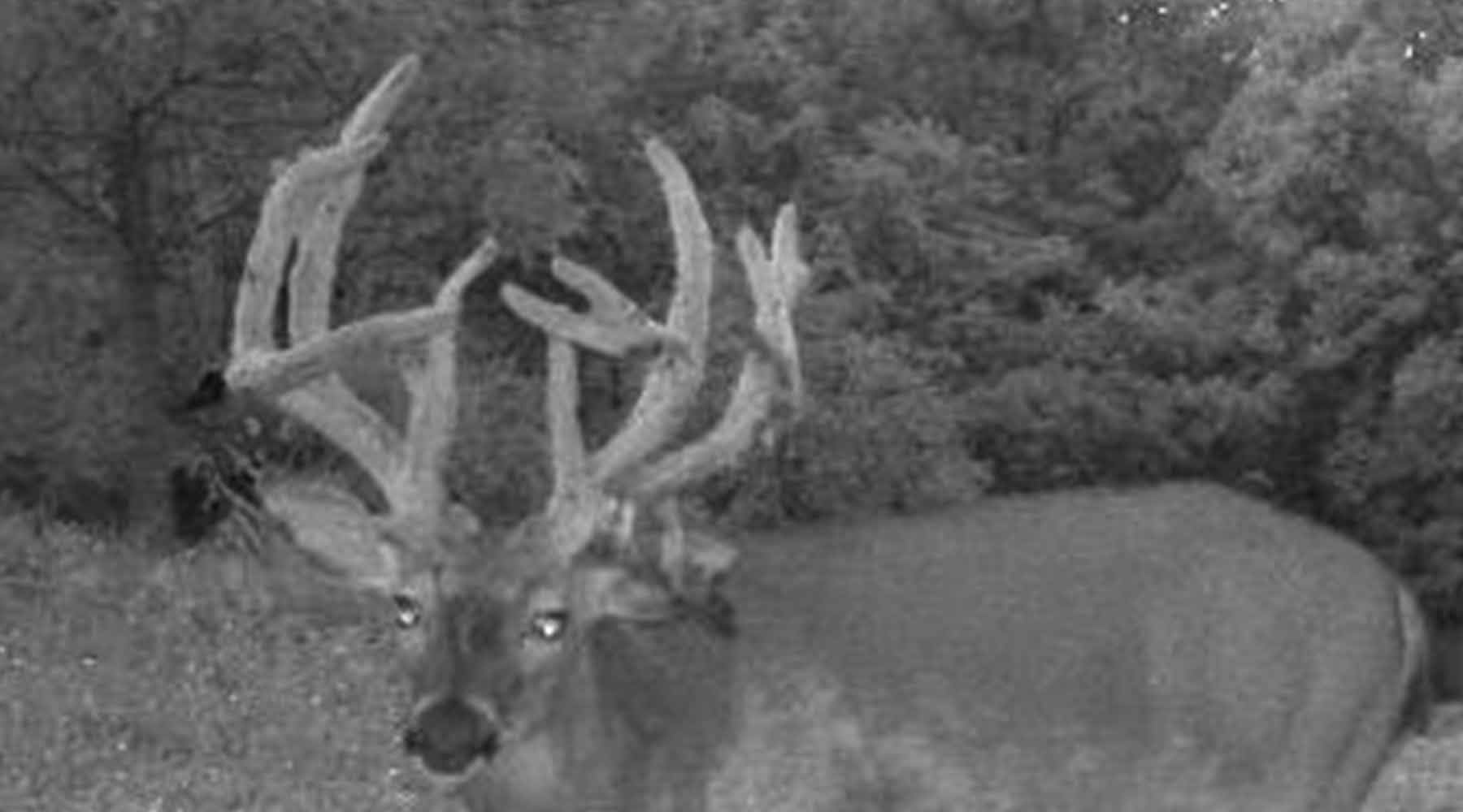 The Double Main Beam Buck
