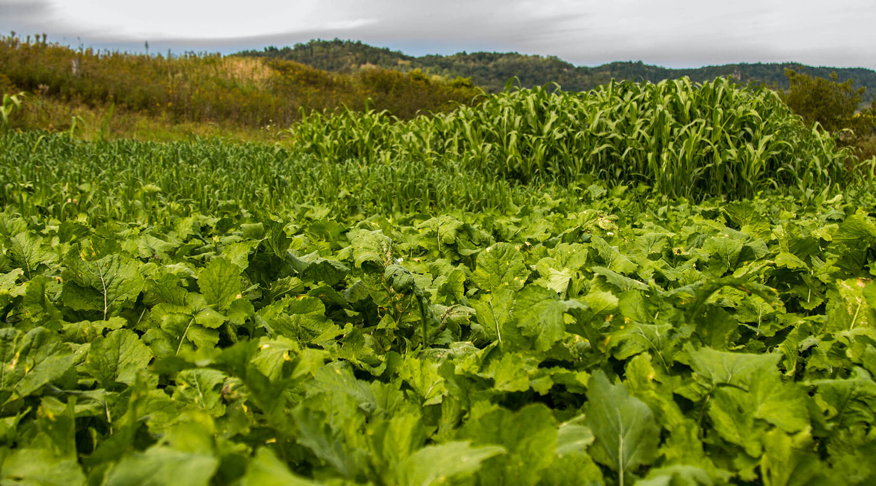 3 Reasons for Planting Late Summer Food Plots