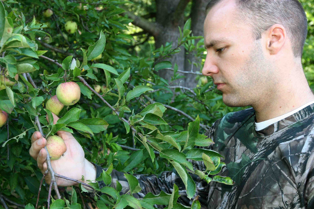 Plant apple trees for your deer