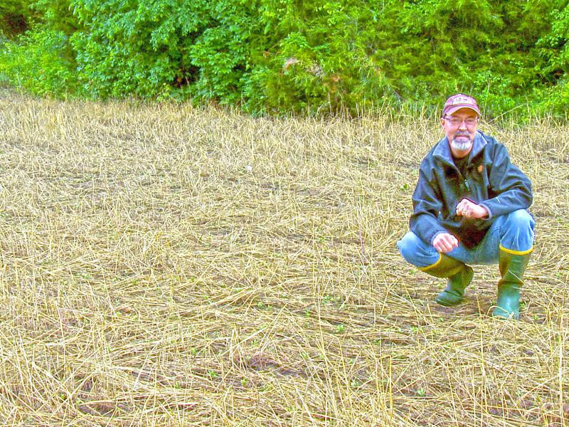 Inspecting food plot