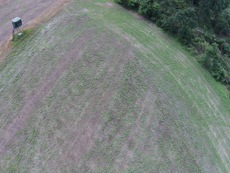 View of hunting lease from drone