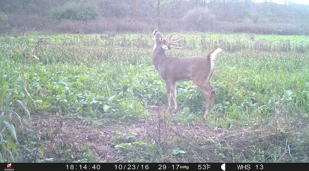 Recommended trail camera