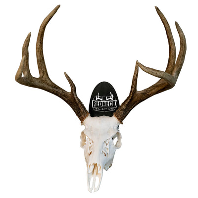 Deer Skull Wall Mount