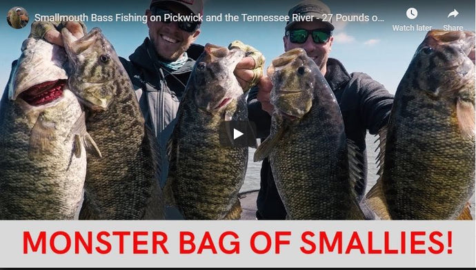 Smallmouth Bass Fishing on Pickwick and the Tennessee River - 27 Pounds of Smallmouth Today!