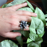 large silver echeveria succulent on a wide band from midsummer