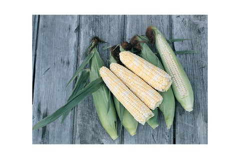 Johnny's Selected Seeds - Organic Corn - Green Wave Products, LLC