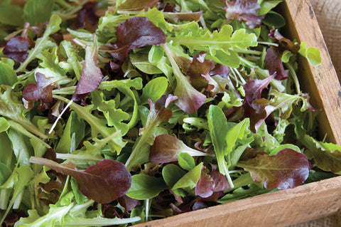 Johnny's Selected Seeds - Encore Lettuce Mix