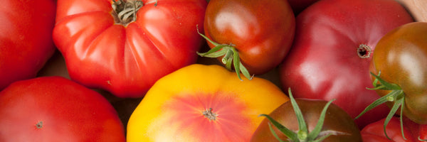 Johnny's Selected Seeds - Organic Tomato