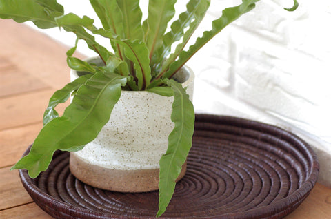 Handmade ceramic planter pot pottery with drainage hole natural speckled cream with brown
