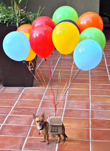 Five diy easy costumes your dog is sure to bark for this halloween balloons cardboard house adorable up costume for your dog solutioingenieria Image collections