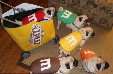 Five diy easy costumes your dog is sure to bark for this halloween have more than one dog and want a costume theme for all of them were pretty sure this m and ms themed costume idea will fit the bill solutioingenieria Image collections