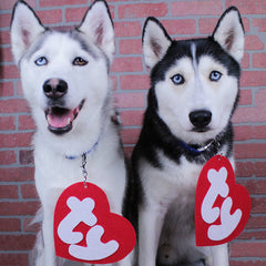 Five diy easy costumes your dog is sure to bark for this halloween this one has to be the most easy diy doggie costume idea on the planetd also one of the best a simple large ty tag that you attach to your dogs solutioingenieria Image collections