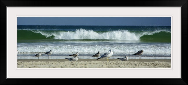 Locals Hangout | Gulls on Corova Beach - Mission Art OBX