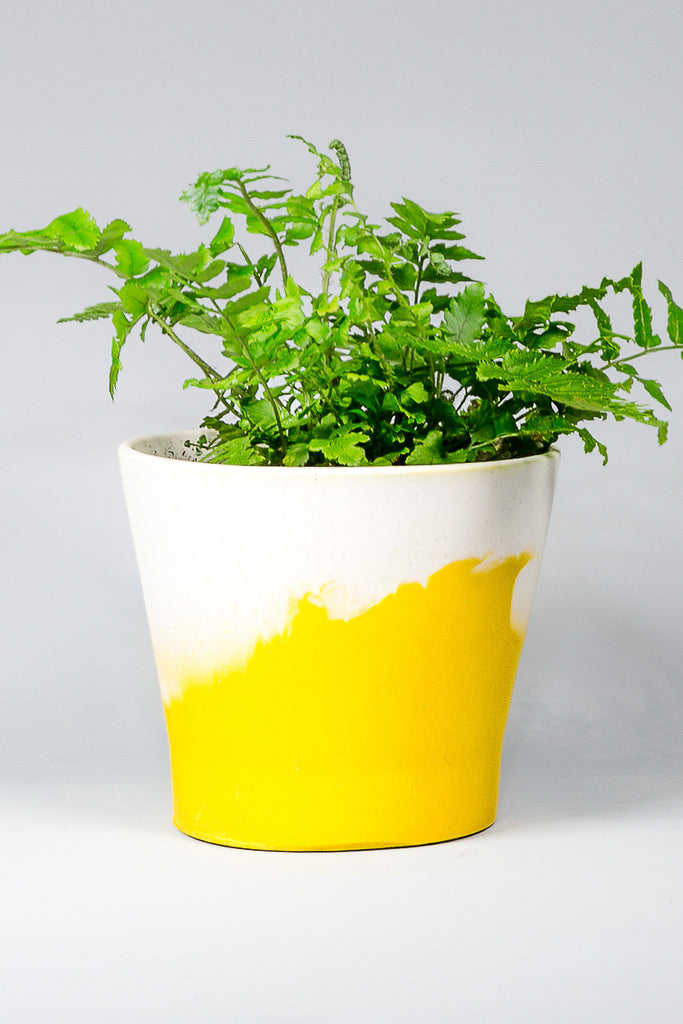 Dipped – Mustard Yellow & White Pot