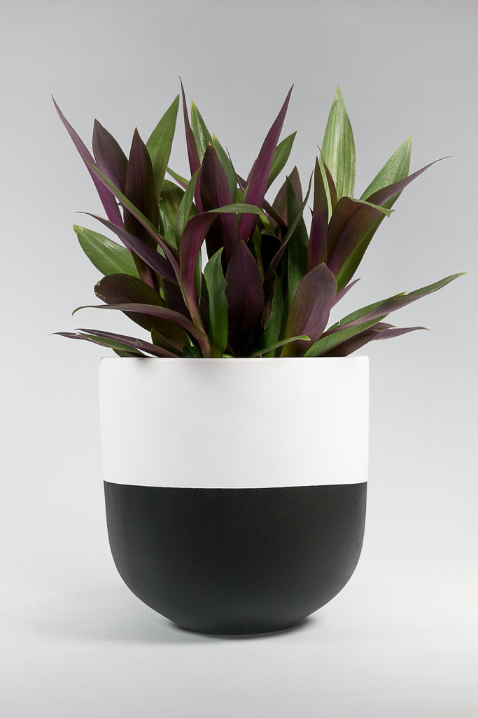 Black and White Concrete Pot