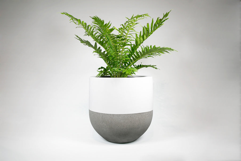 White and Concrete Pot