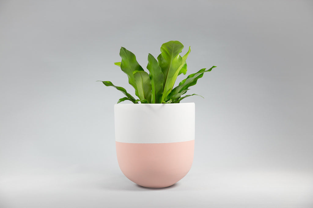 Sorbet and White Concrete Pot