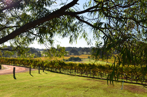 Hay Shed Hill Private Vineyard Tour Margaret River