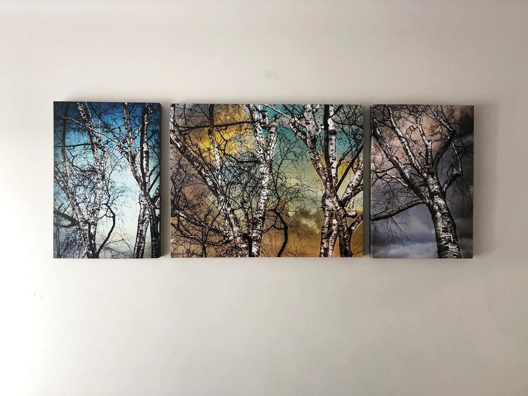 Birch Trees - Split Canvases