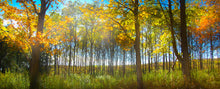 Fall Trees Panoramic