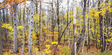 Fall Trees Panoramic Painting