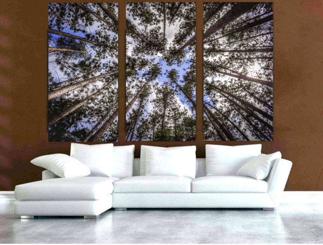 Muskoka Trees on Split Canvas