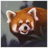 Red panda wall art canvas