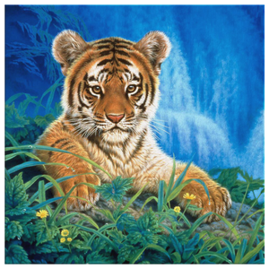 Tiger Canvas Print algarve online shop