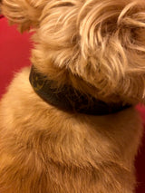 LVoe Dog or Cat Collar Supreme Handmade