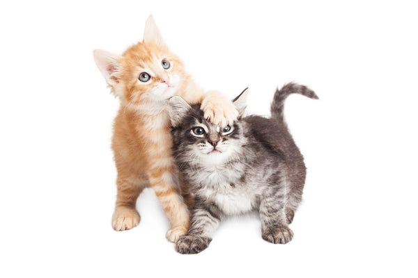 Two Cat Family Monthly Package