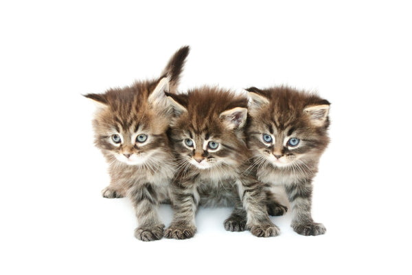 Three Cat Family Monthly Package
