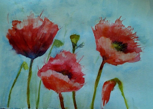 Fresh Poppies