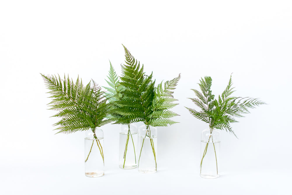Greenhouse Bud Vase Set