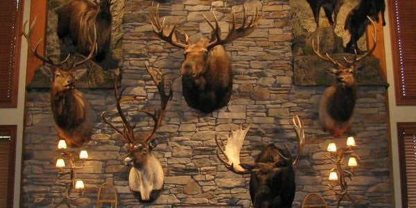 Finding the Perfect Taxidermy Decor