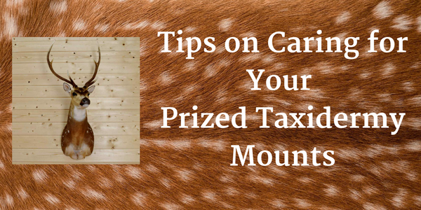 Some Tips for Caring for Your Taxidermy Mounts