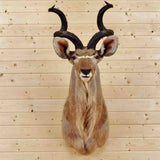 Kudu Taxidermy Mount for Sale