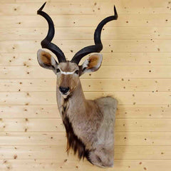 Taxidermied Animals for Sale