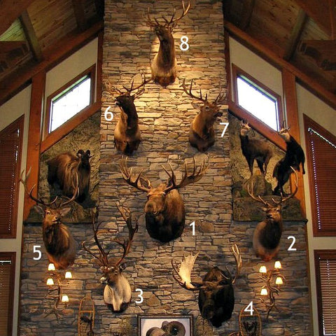 Decorating with Taxidermy Ideas