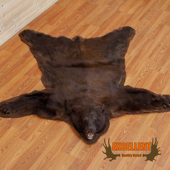 black bear rug brown phase