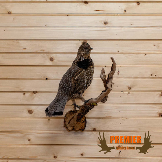 ruffed grouse taxidermy mount