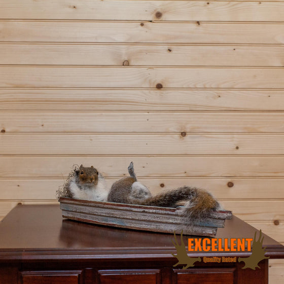 Gray Squirrel Relaxing in Boat Taxidermy Mount - SW10148