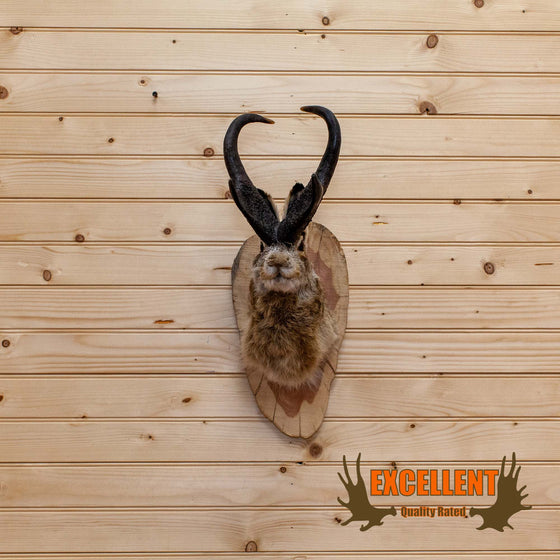 pronghorn jackalope taxidermy mount for sale